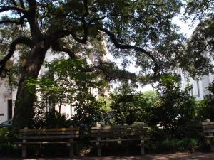 Savannah, 2007